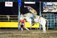 Bull rides at Mooloolah Rodeo