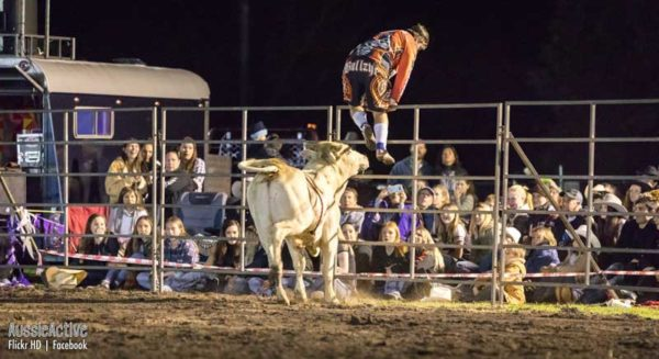 Bull chasing the rodeo clown up the fence